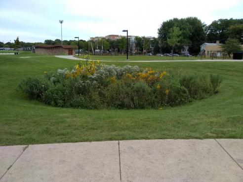 The raingarden at McPike Park, one of the areas being actively managed for invasive species.