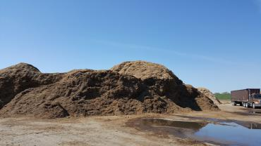 Pile of wood chips at the brush processing center