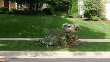 A perfect brush pile. Cut ends facing the same direction.  Away from obstructions.