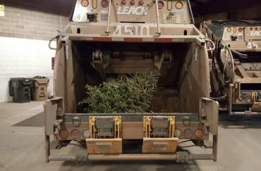 Final round of curbside Christmas tree collection begins on January 22.